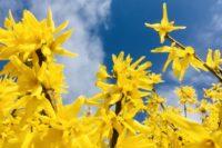 Mehr Immunabwehr: Sonne, Aktivität & CELLAGON®